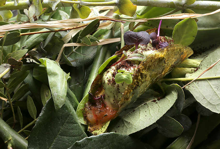 58-NOLA-GRAS_amazonas