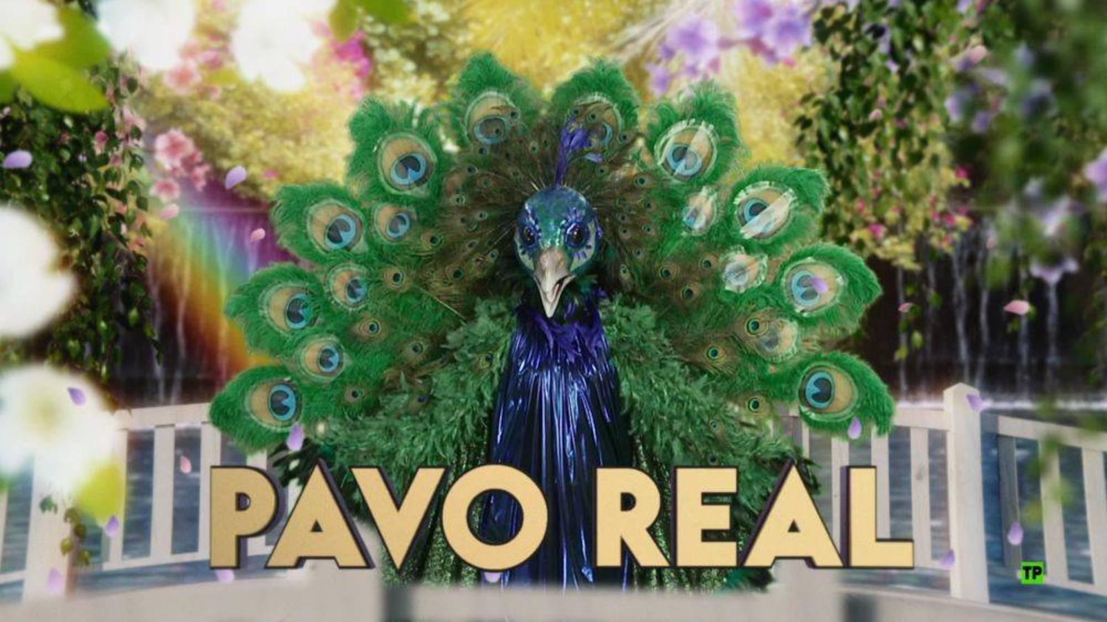 pavo real mask singer
